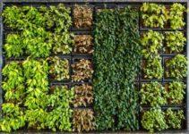 15 Incredible Benefits of Having a Vertical Garden at Home