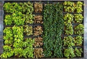 garden-wall-or-vertical-garden